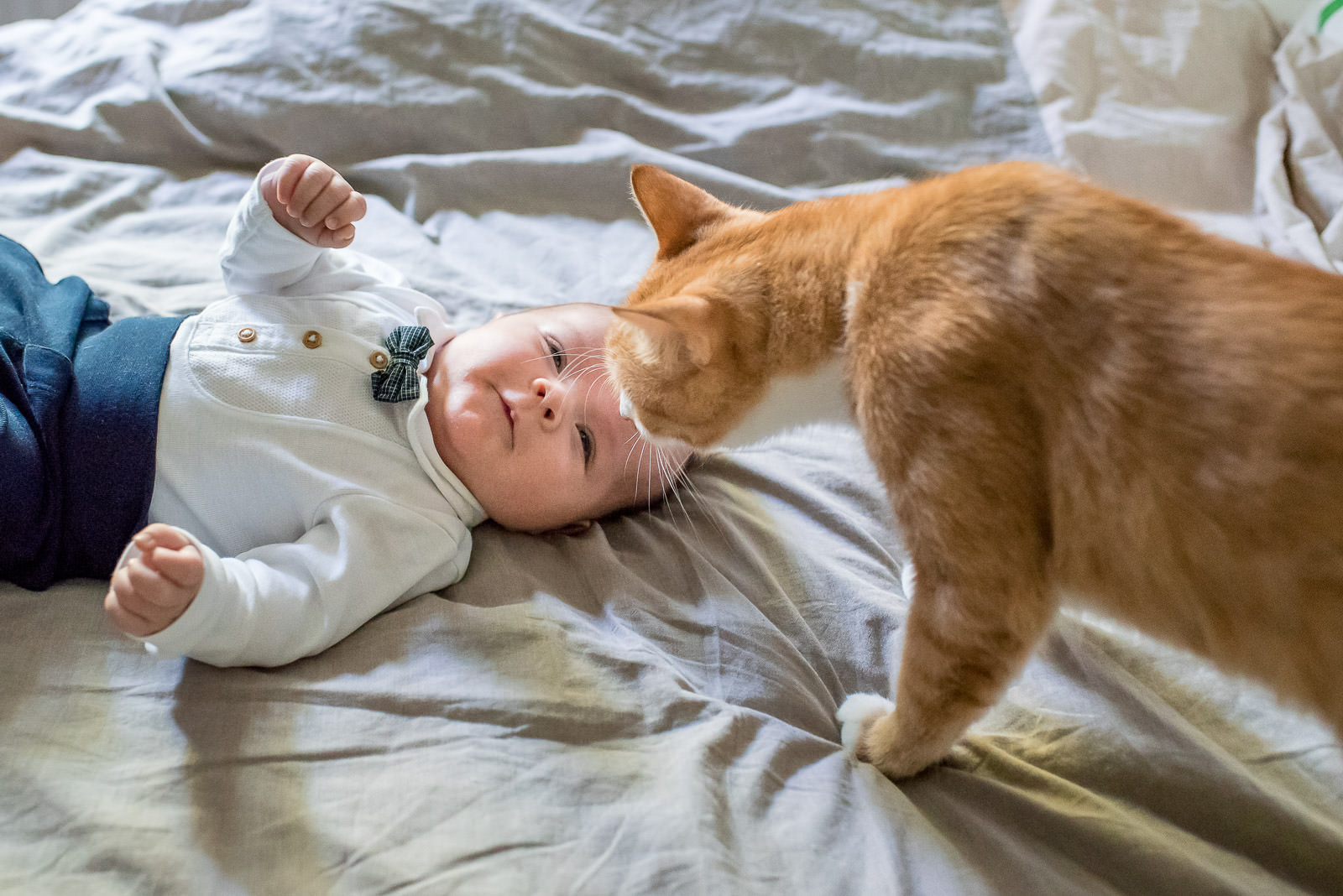 cat sniffing newborn baby