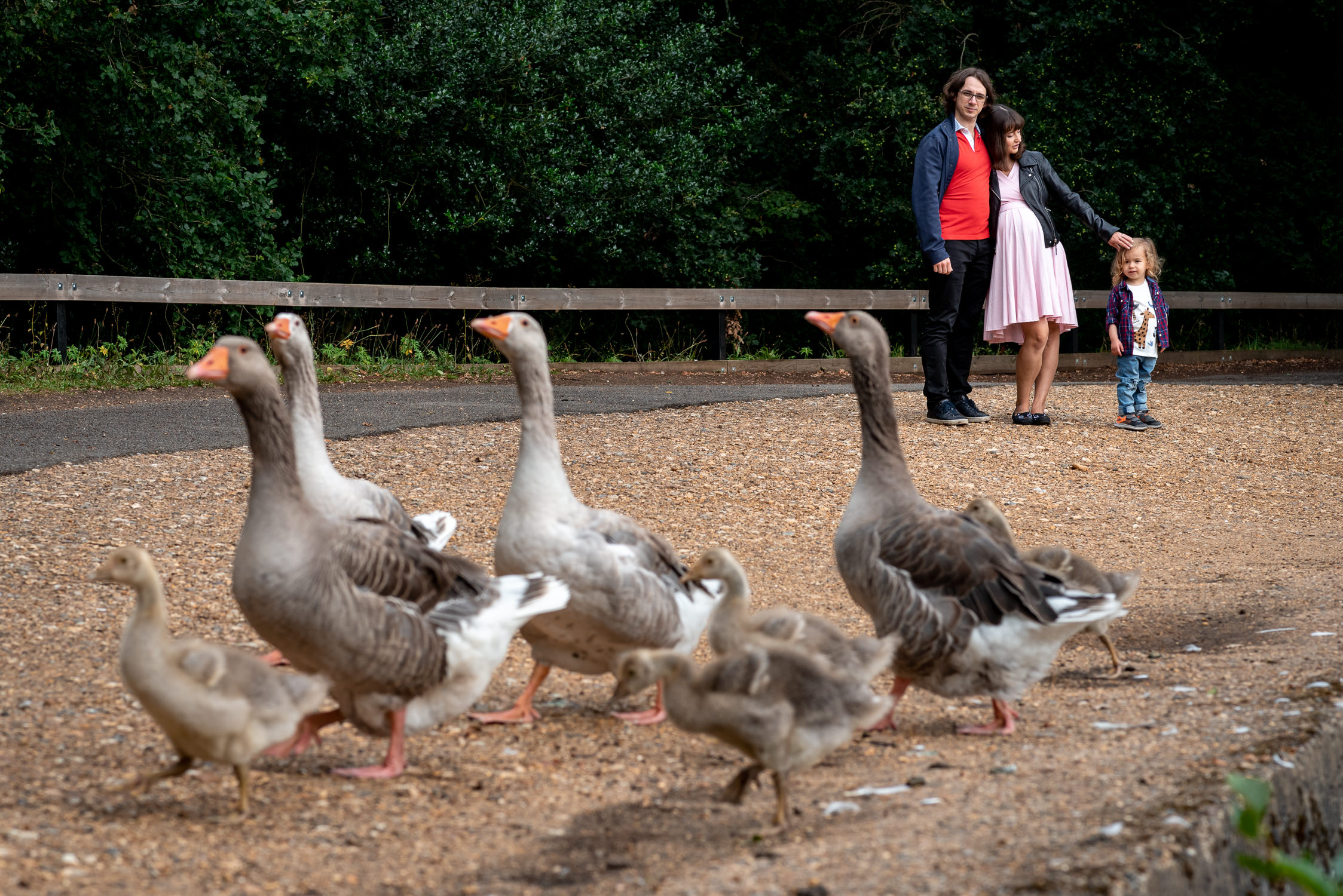 geese in Black Park on a family shoot